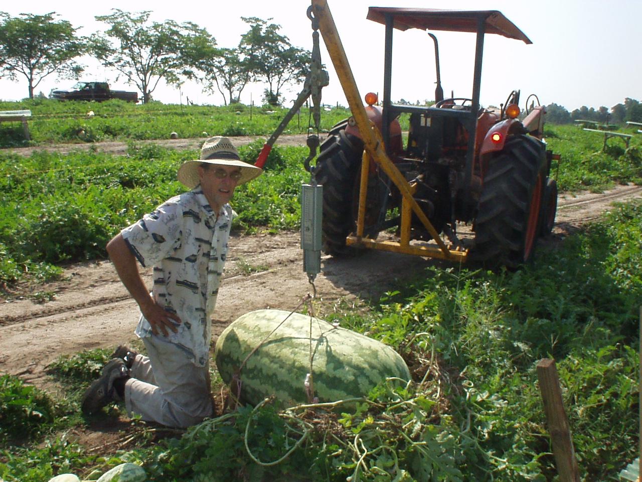 Lloyd Bright - 268.8 melon