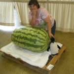 Giant Watermelon Picture - 260 Kent