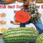 Giant Watermelon Picture - 234 Berry - 2011
