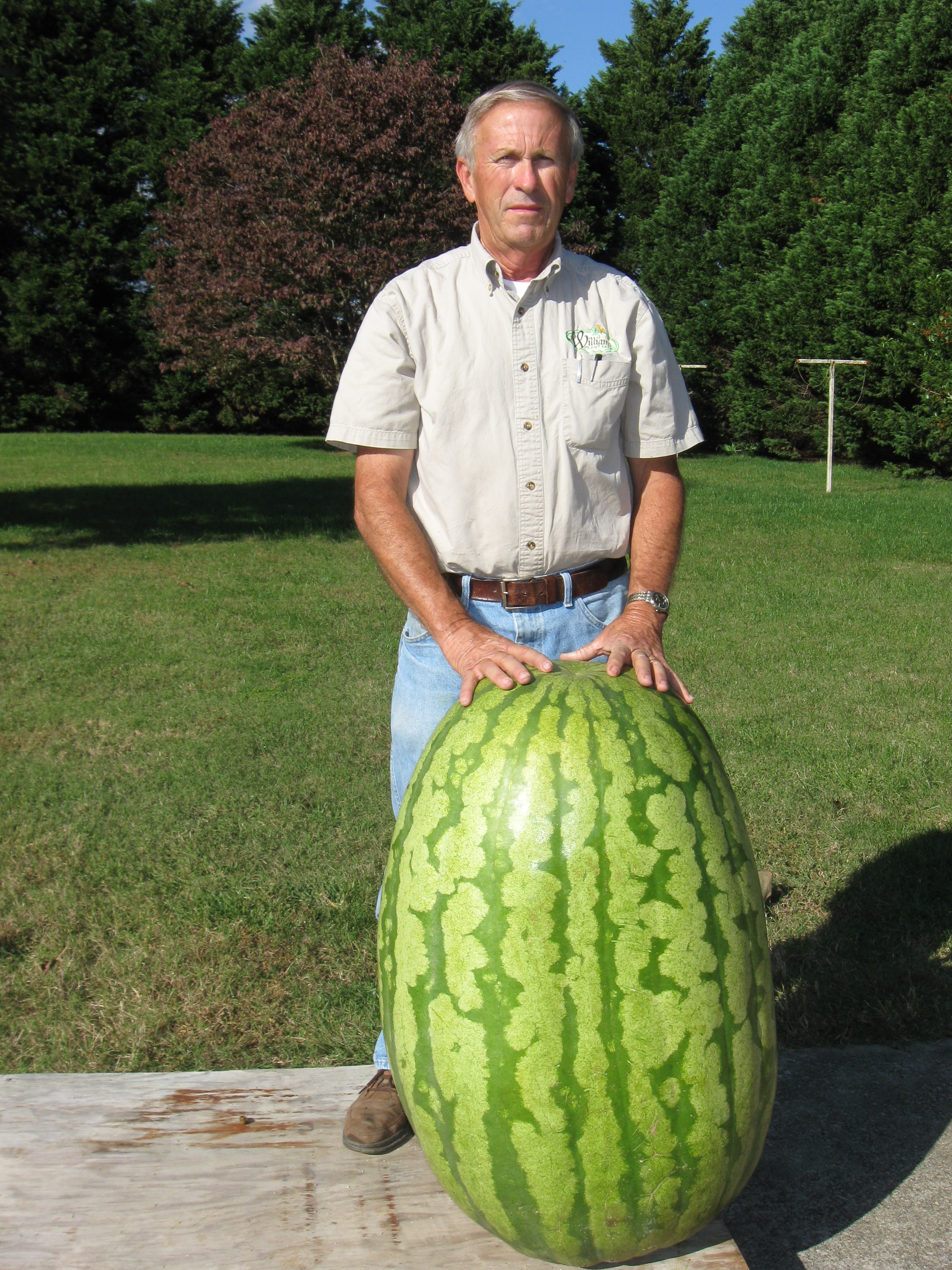 Giant Watermelon Picture - 233.5 Williams