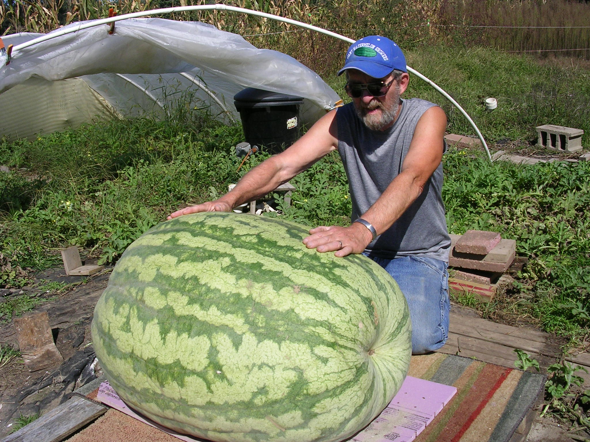 Giant Watermelon Picture – 316 Edwards